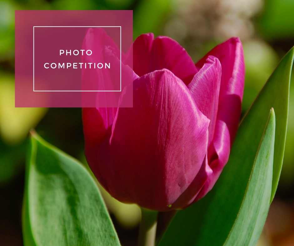 Link to our photo competition