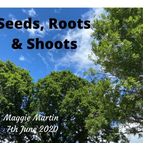 Seeds, Roots & Shoots